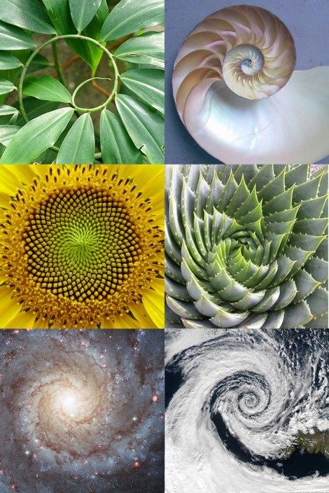 20141024174059-spiralsinnature